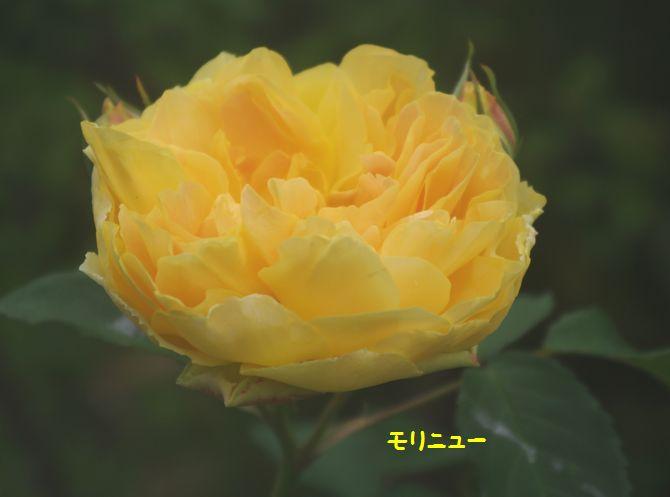 IMGP1946.JPG