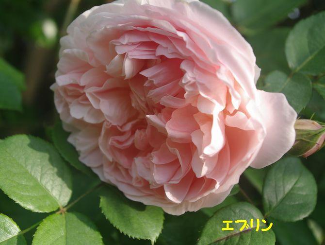 IMGP2046.JPG