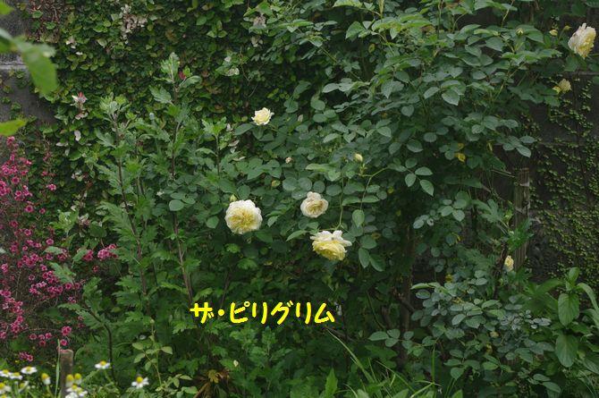 IMGP2132.JPG