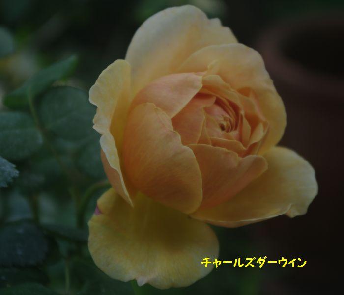 IMGP5579.JPG