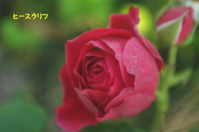 IMGP5723.JPG