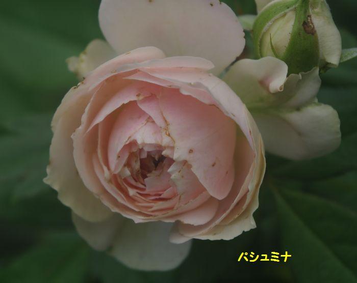 IMGP6487.JPG