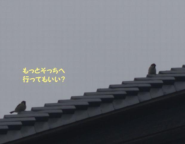 IMGP9474.JPG