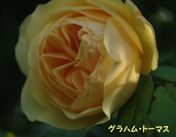 IMGP9885.JPG