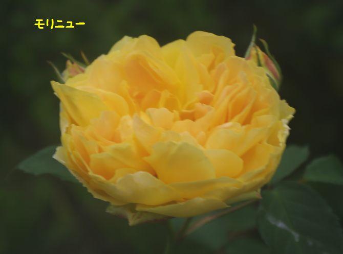 IMGP1947.JPG