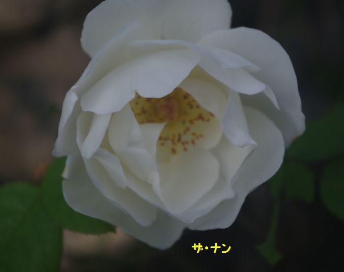 IMGP7342.JPG