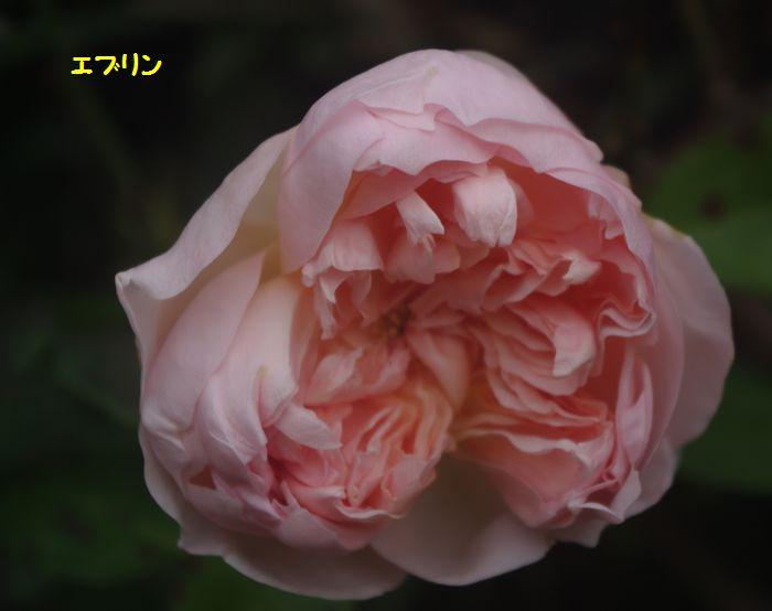IMGP7560.JPG